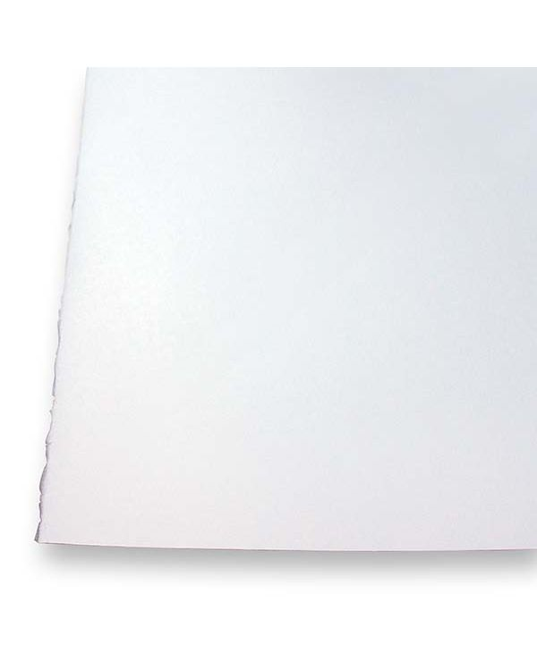 35 x 50cm Half Sheets Pack of 20 Sheets - 300gsm - Botanical Ultra Smooth